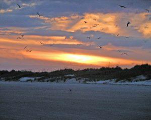 Bird Island Sunset - Unreleased